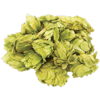A picture of whole, fresh hops
