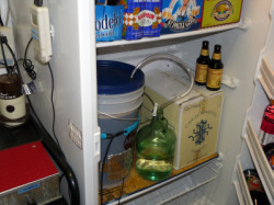 Fermentation Temperature Control-Using a spare freezer or refrigerator. Notice Brew-belt and blow-off hose.