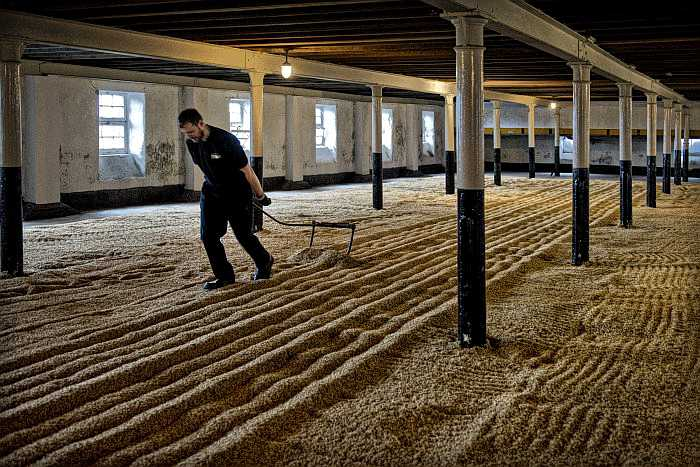 A picture of a guy doing traditional floor malting.