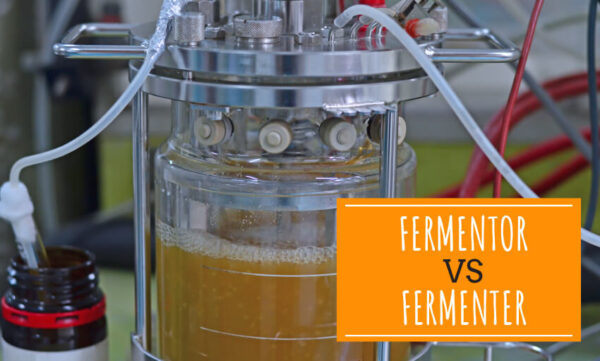A picture of homebrew fermenting. Text reads fermentor vs fermenter.
