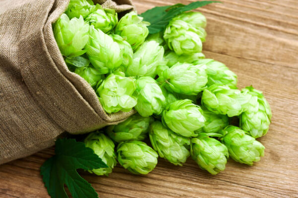 A picture of hops fruit coming out of a bag onto a wooden background.