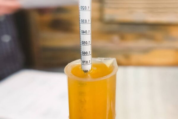 Best pH Meter For Brewing